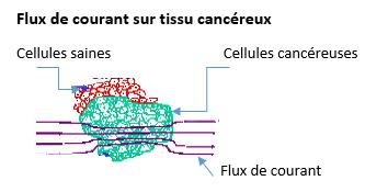 Gaspard FluxCourantTissuCancereux
