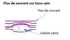 Gaspard FluxCourantTissuSain